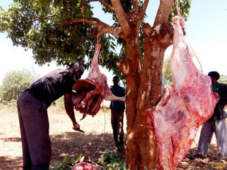 Misair Ssenyange a butcher slaughtering a cow that collapsed at Wabbale village in Naksongola town. The meat was sold at Shs 1000 per kilogram